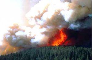 Yellowstone Fires